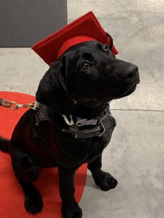 graduating from puppy school