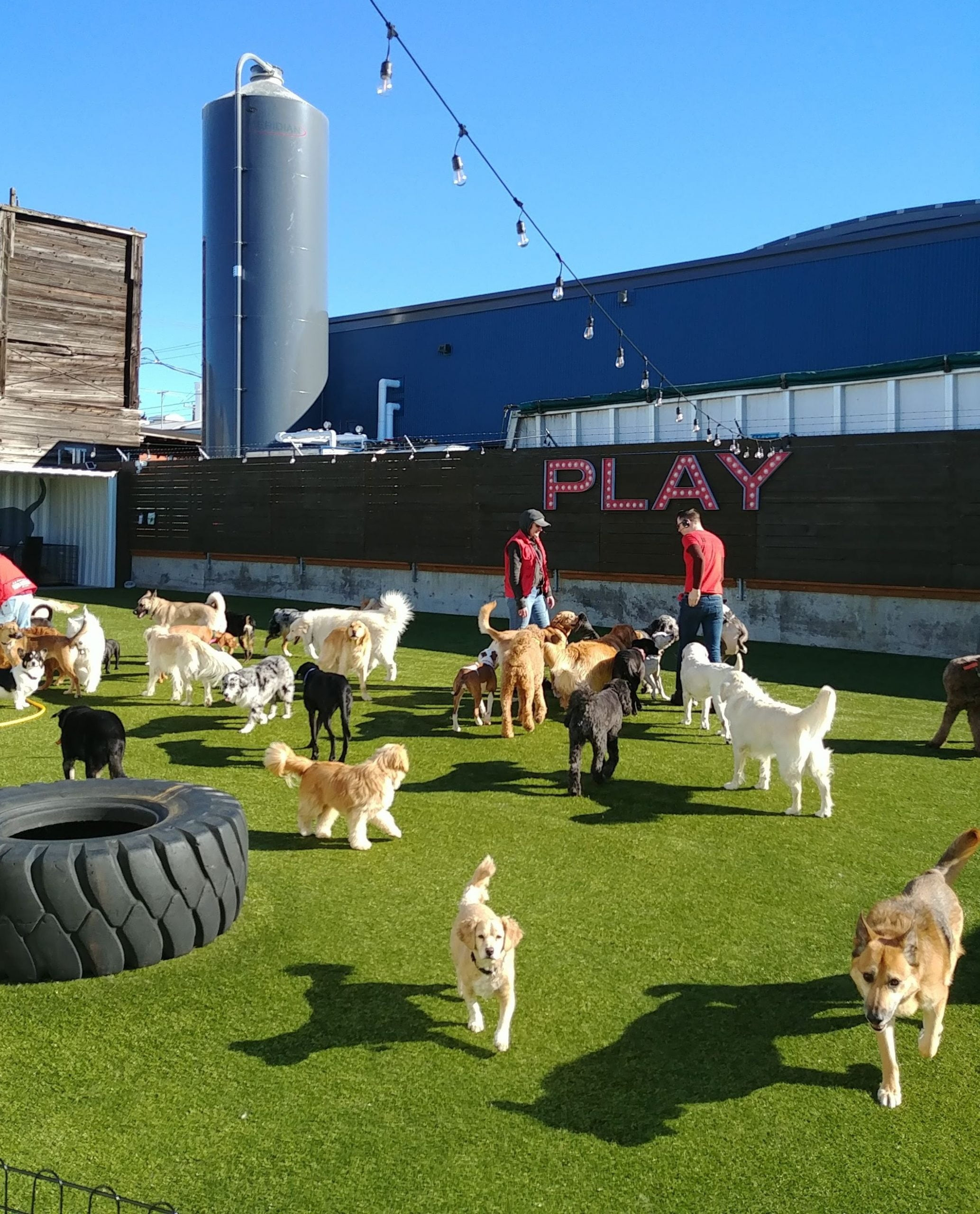 dog pack socializing in the play park