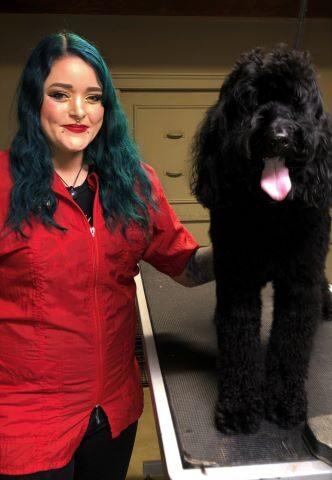 Dog Groomer: Barb