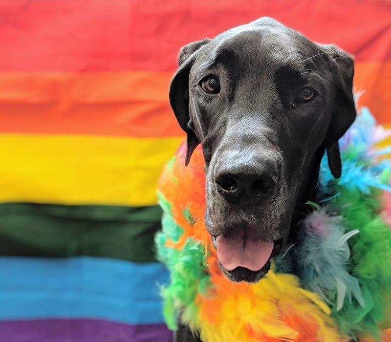 dog with rainbows