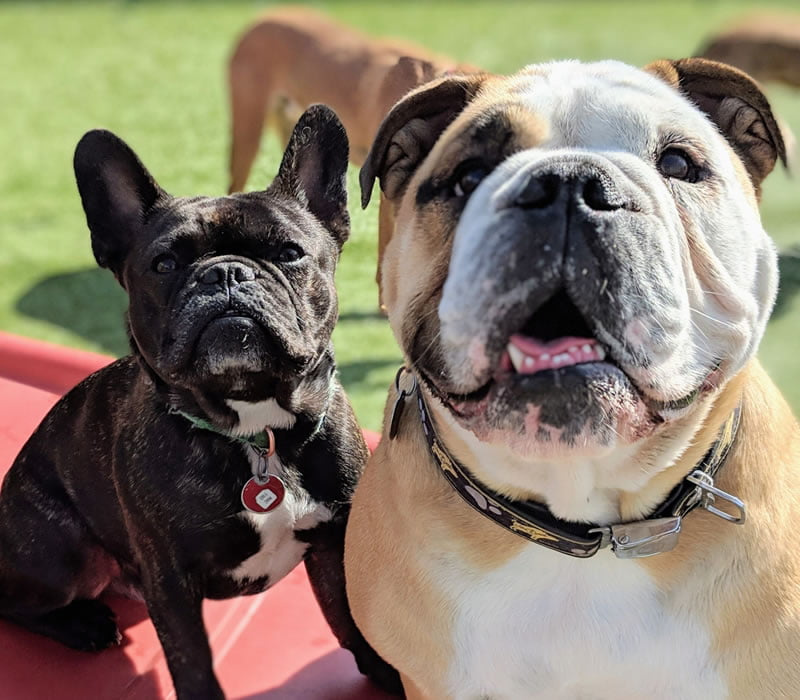 two dogs in the sunny play yard