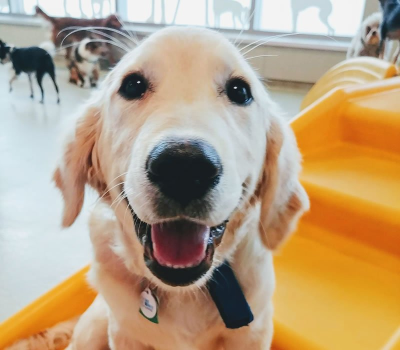 happy dog on indoor play structure