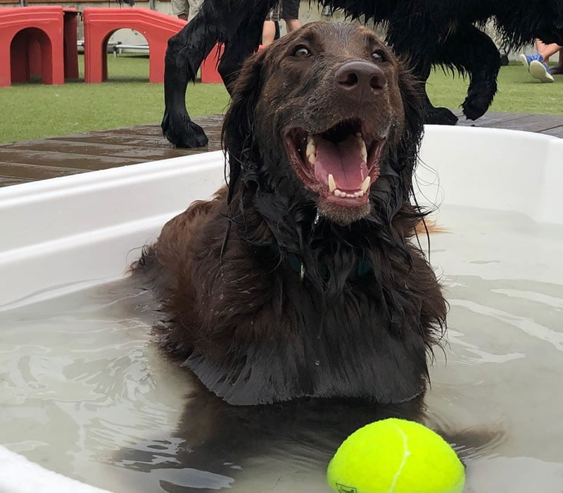 dog playing in the pool