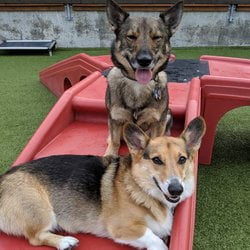 two dogs in the play yard