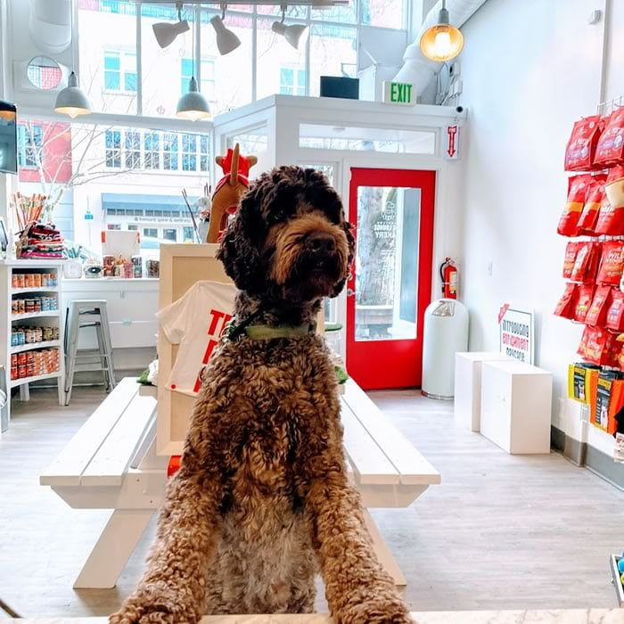dog visiting the bakery