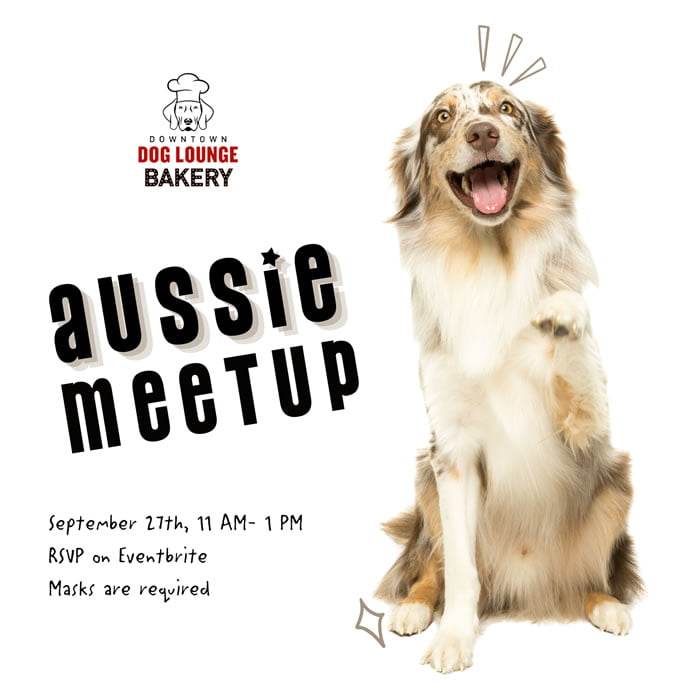 Seattle Dogs - Aussie Meetup in Fremont