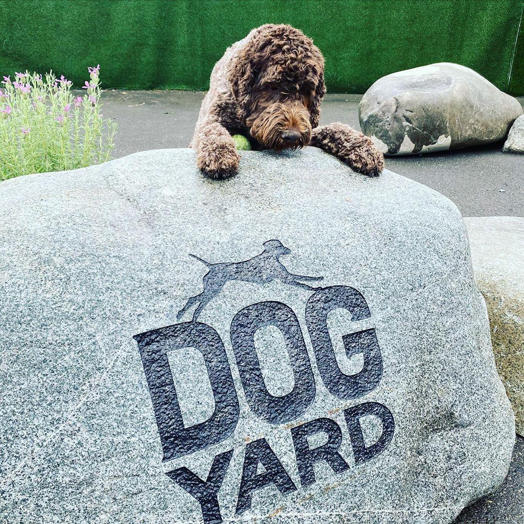 Dog Yard Bar logo etched on a boulder