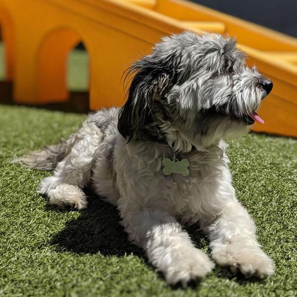 Dog sitting in the sun