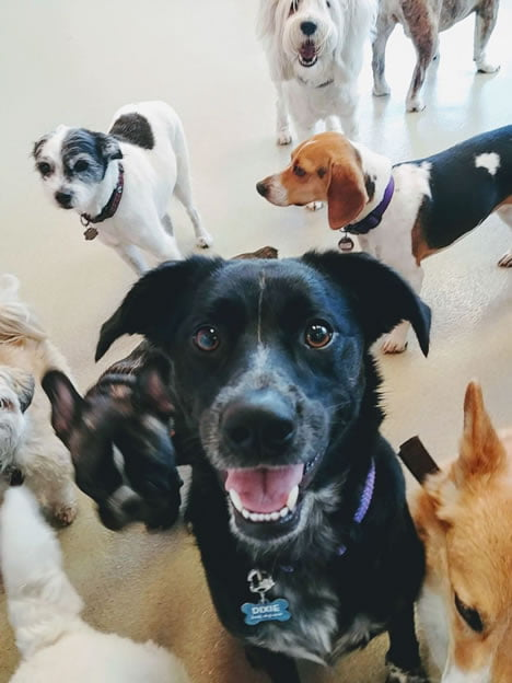 dogs playing at doggie daycare