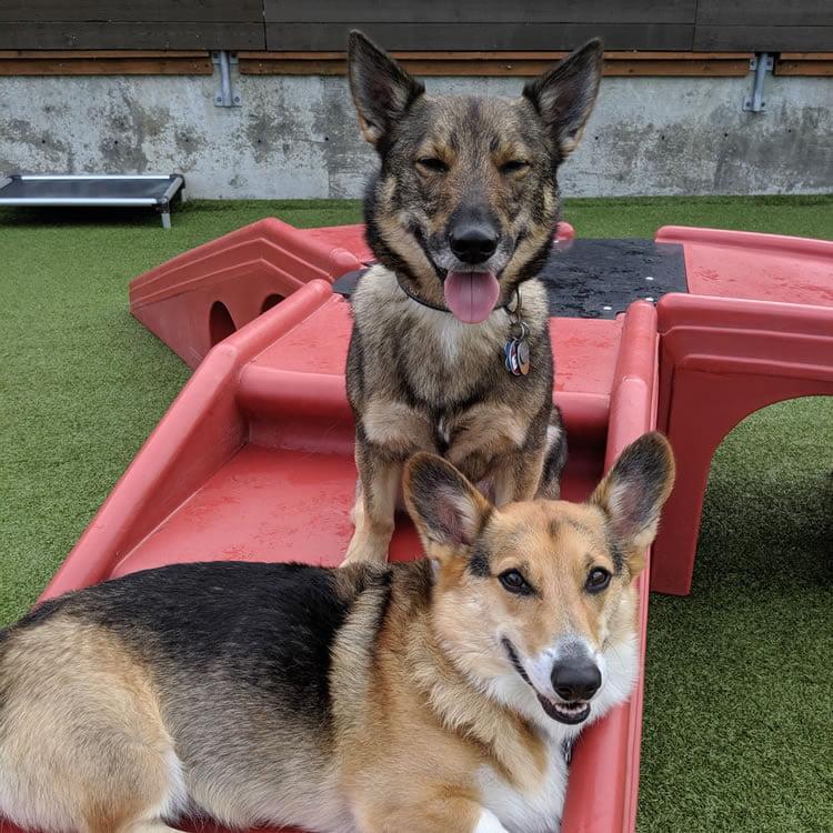Ballard outdoor dog play space