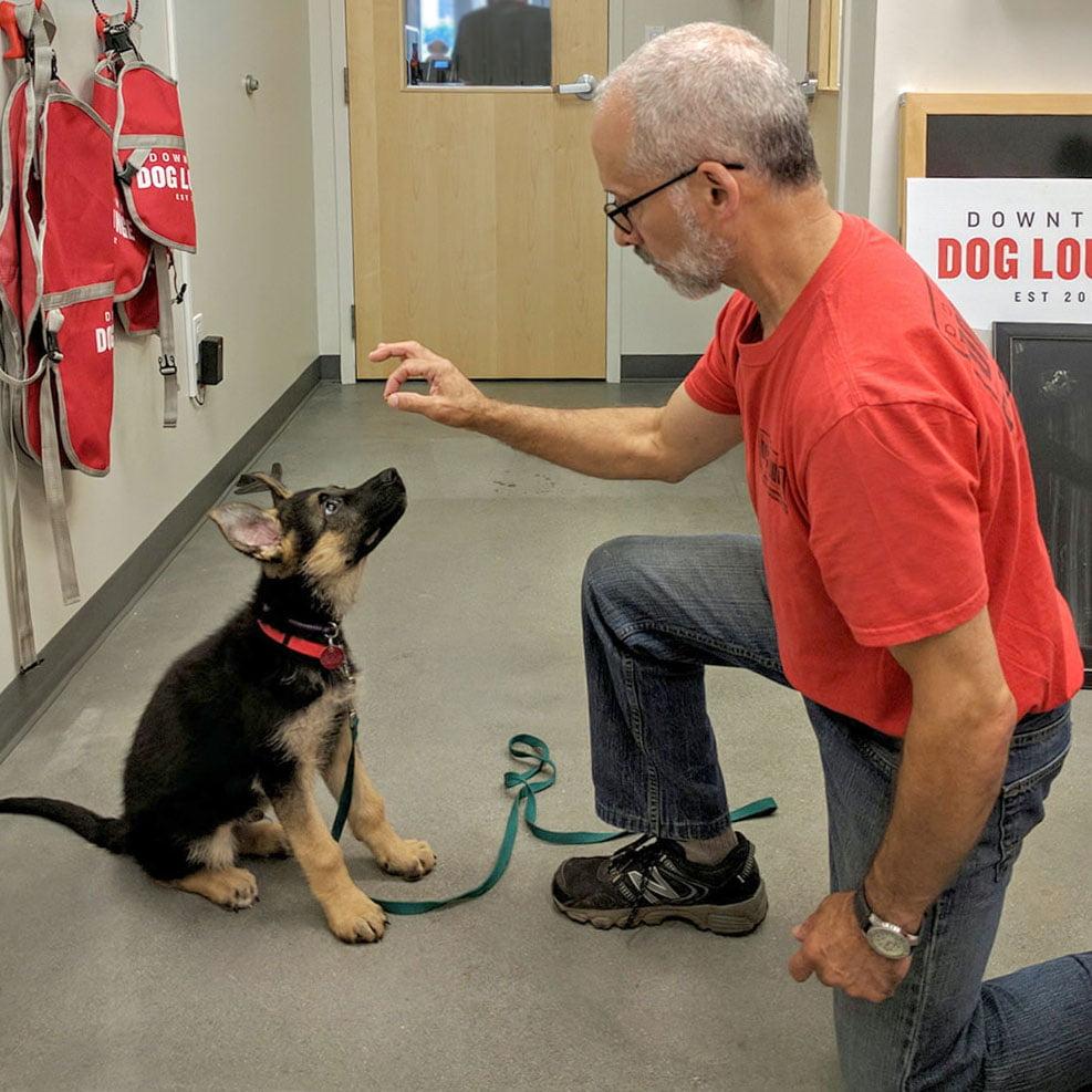 Seattle dog training