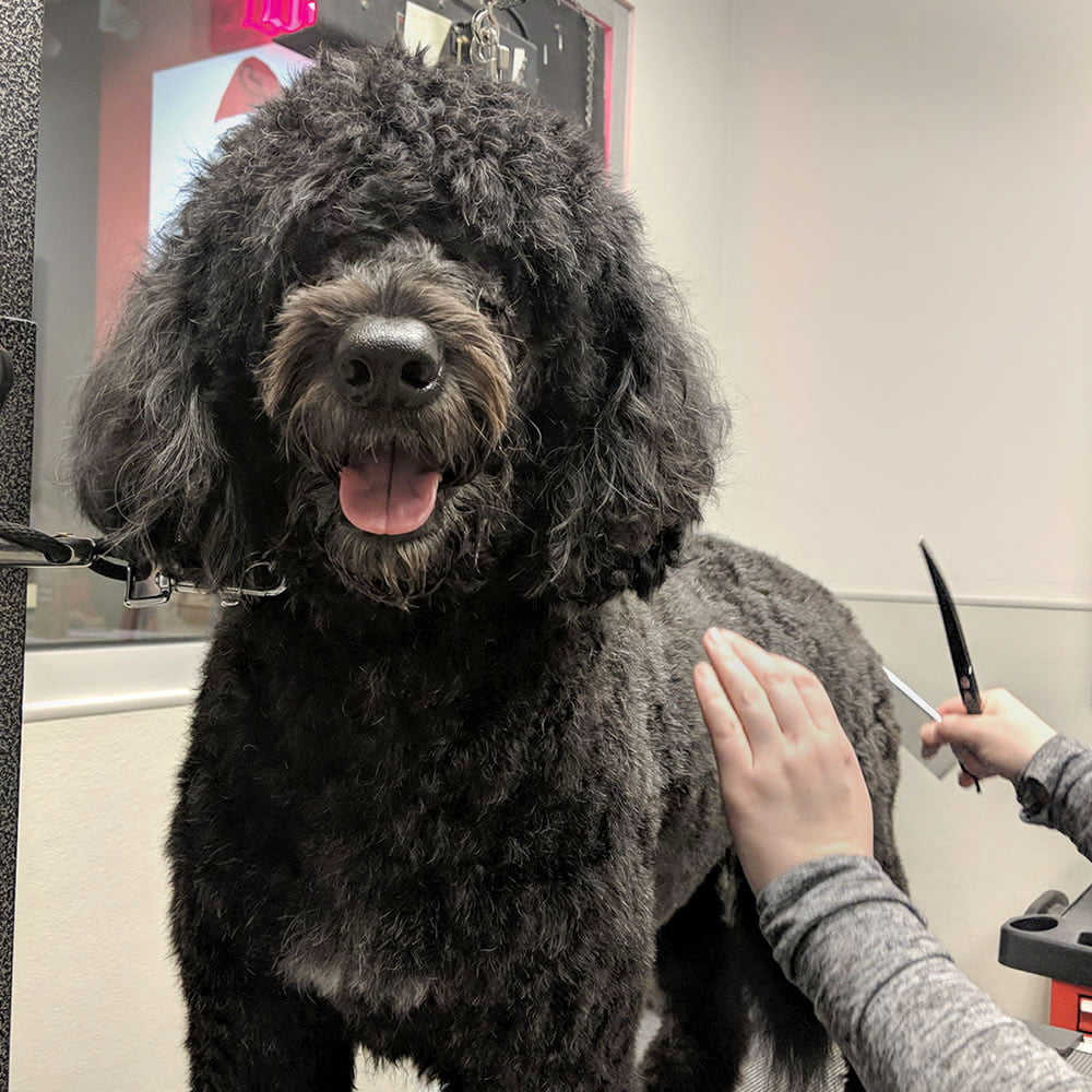 Seattle dog grooming and bathing