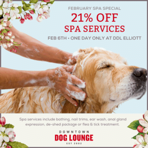 February Spa Special - dog wash discount