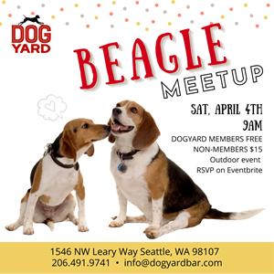 Seattle Beagle meetup in Ballard at the Dog Yard