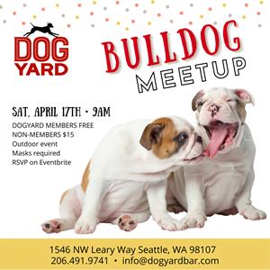 Seattle Bulldog Meetup in Ballard