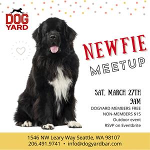 Newfoundland dog meetup in Ballard - Calling all Seattle Newfies!