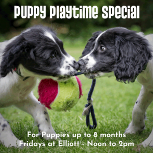 puppy daycare playtime special