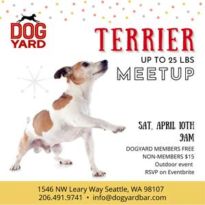 Terrier meetup in Ballard - Jack Russell, Scottich, Norfolk, Welsh, Westie,, Cairn Terrier