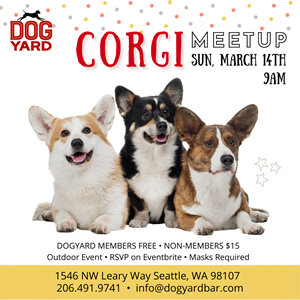 Corgi meetup in Seattle