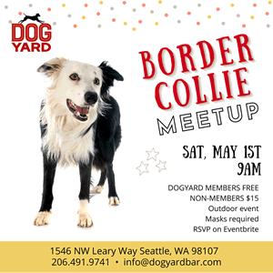 Seattle Border collie meetup in Ballard