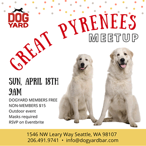 Seattle Great Pyrenees (Pyrenean Mountain Dog) Meetup