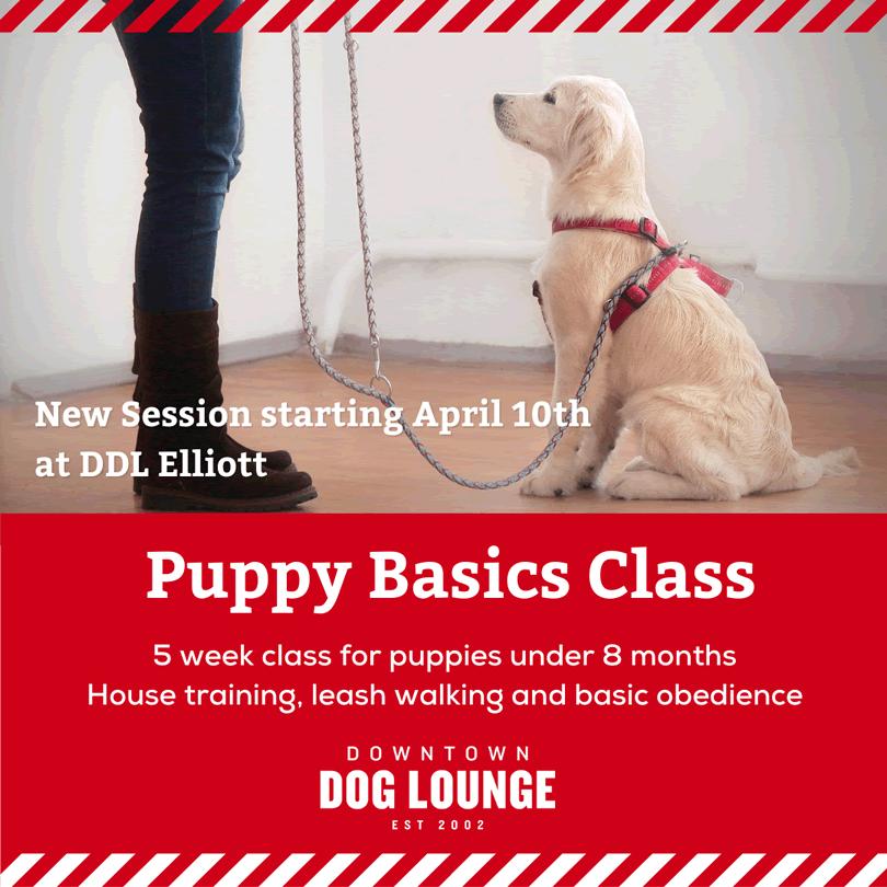 Seattle puppy basics training class