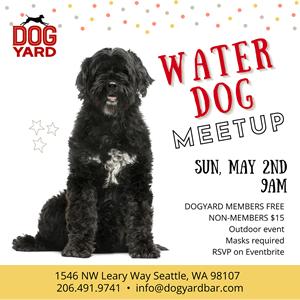 Water dog meetup at the Dog Yard in Ballard