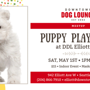 Puppy meetup in Seattle