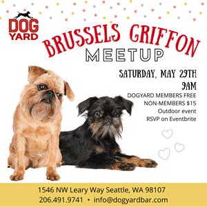 Seattle Brussels Griffon Meetup in Ballard