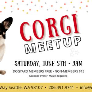 Seattle Corgi meetup in Ballard at the Dog Yard