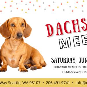 Seattle Dachshund meetup in Ballard