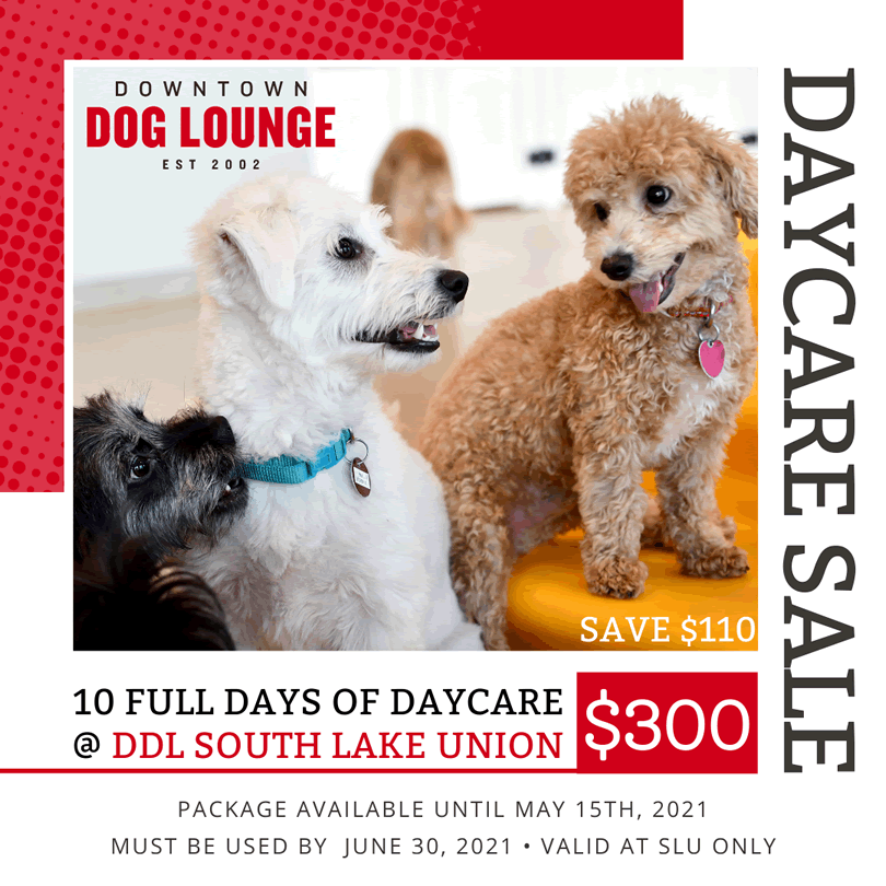 Seattle Dog Daycare Package Sale