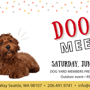 Seattle Doodle meetup in Ballard at the Dog Yard