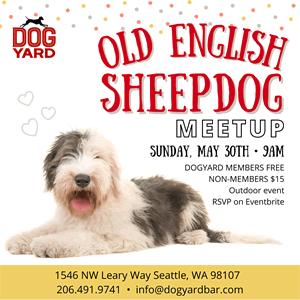 Old English Sheepdog meetup in Ballard