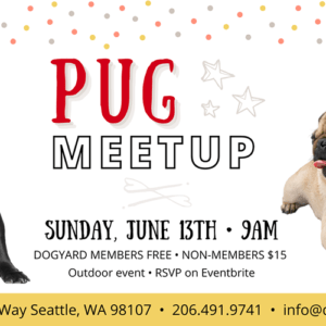 Dog breed meetup in seattle: Pugs