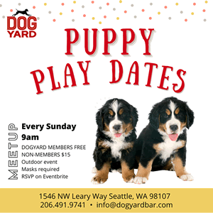 Puppy socialization in Ballard