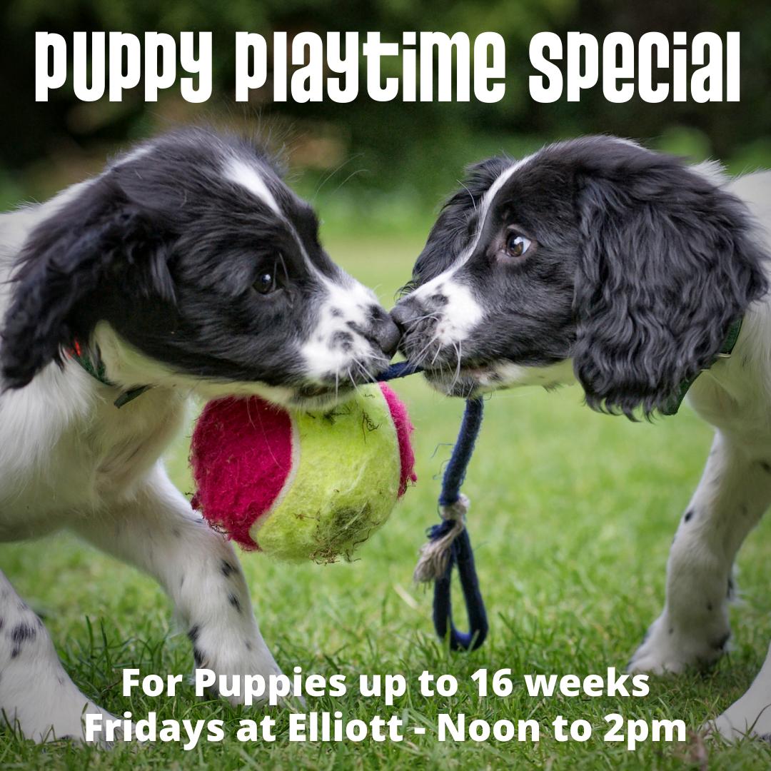 Seattle Puppy Daycare