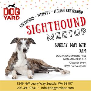 Sighthound meetup at the Dog Yard in Ballard