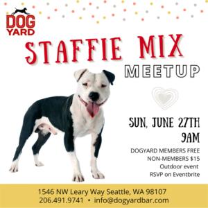 Staffie (Pitbull) Meetup