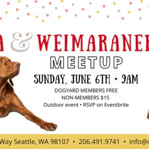 Seattle Vizsla & Weimaraner meetup