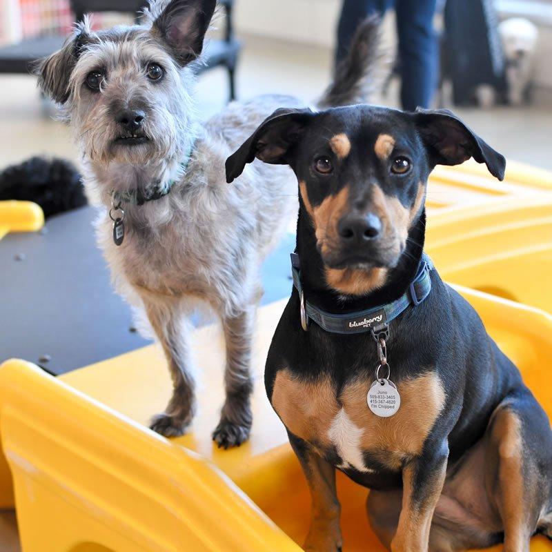 Seattle doggie daycare buddies