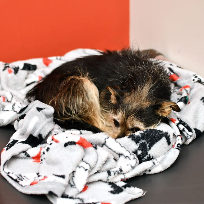 dog curled up in blanket