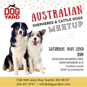 Seattle Aussie Meetup - Australina Shepherds & Sheepdogs