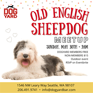 Seattle Sheepdog meetup