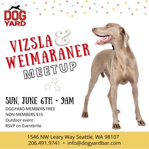 Seattle Vizsla & Weimaraner Dog Meteup