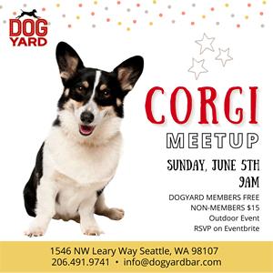 Seattle Corgi Meetup in Ballard