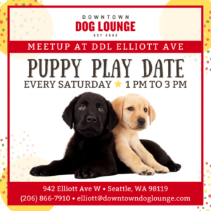 Puppy Meetup every Saturday