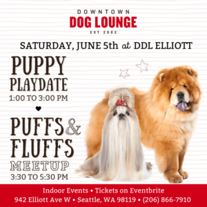 Fluffy dog meetup in Seattle