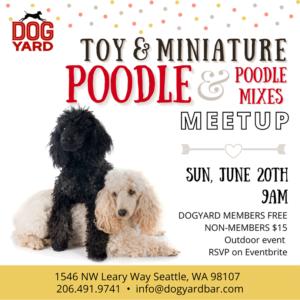Toy & Minature Poodle & Poodle mix meetup