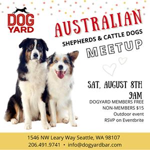Seattle Aussie Shepherd & Cattle Dog Meetup